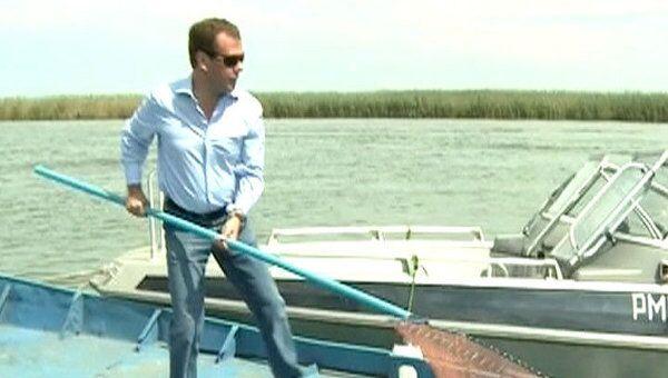 Медведев выпустил в Волгу сотню молодых осетровых
