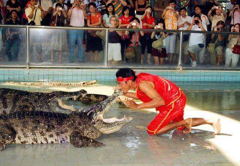 Крокодилы туристического зоопарка Million Year Stone Park and Crocodile Farm в Таиланде