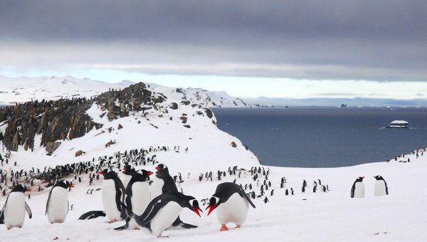 Участники 55-й антарктической экспедиции прибыли на полярную станцию