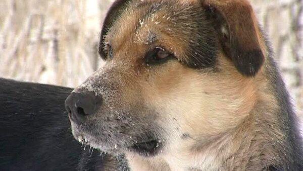 Пес по кличке Хатико в Якутске, который стерег труп собаки