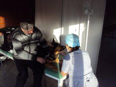 Недалеко от нас ветеринар ласково беседует с овчаркой, пока