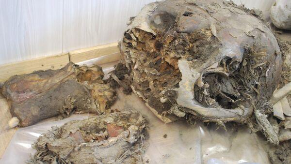 В Якутске палеонтологи исследуют мамонтенка Юку. Архив