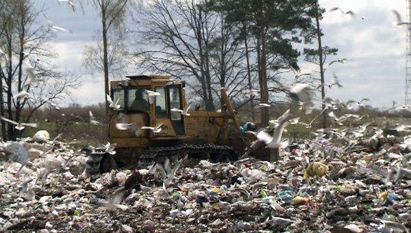 Раздельный сбор мусора: модный тренд, бизнес и забота об экологии