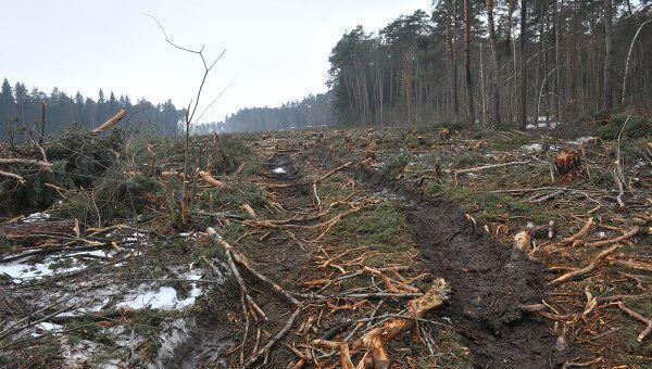 Лагерь защитников Цаговского леса в Жуковском. Архив