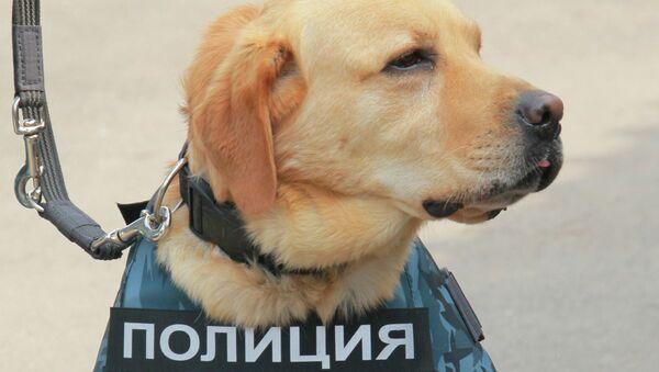 Собака, архивное фото