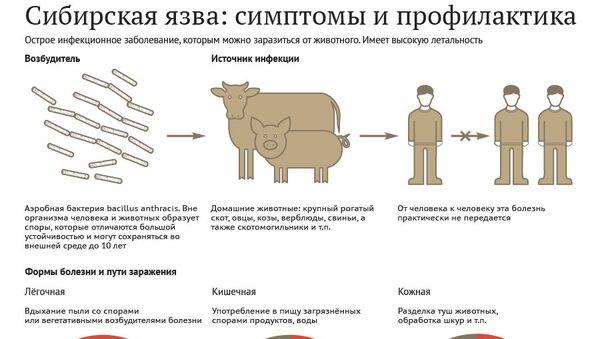 Сибирская язва: симптомы и профилактика