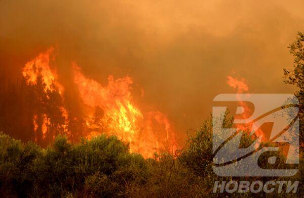 РИА Новости. Фото Алексея Богдановского