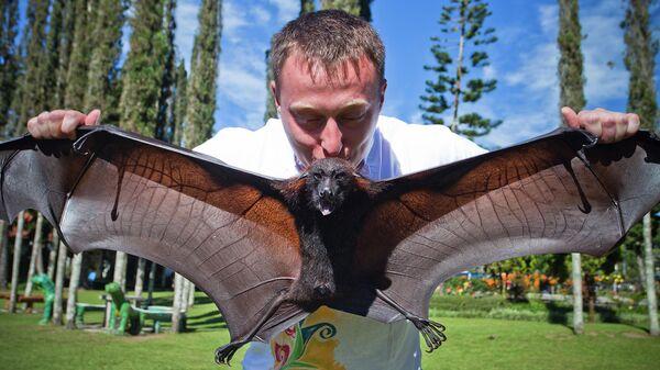 Мужчина держит большую летучую лисицу (Бали, Индонезия)