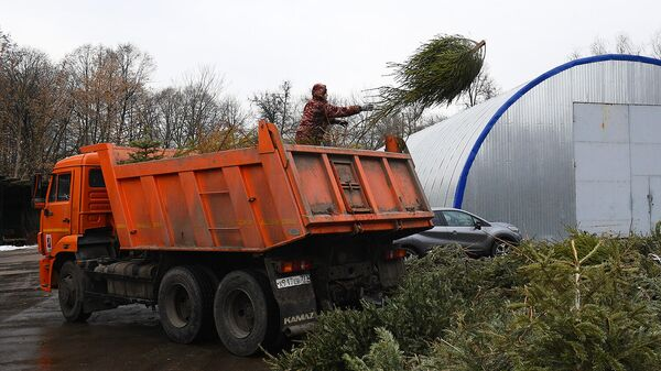 Рабочий пункта переработки новогодних елок выгружает ель из самосвала для последующей переработки