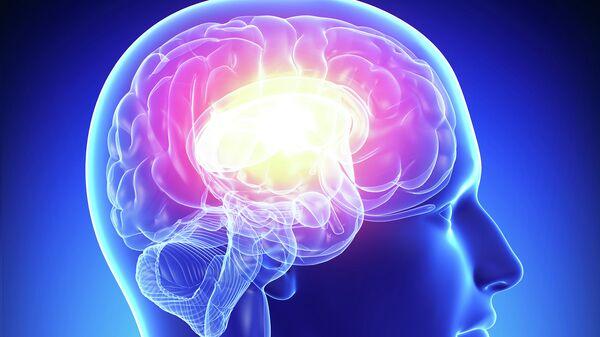 Мозг человека. Архивное фото