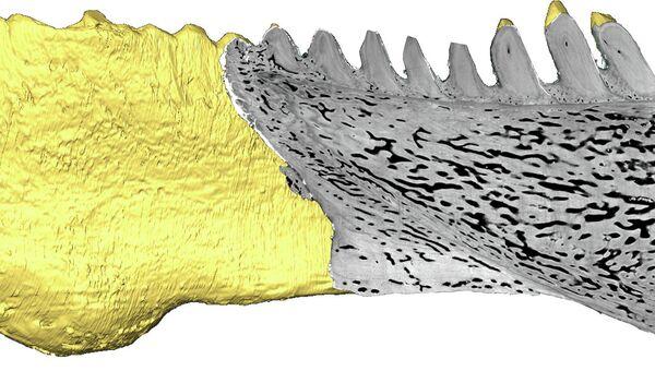 Зубы и нижняя челюсть вымершей рыбы из рода Compagopiscis