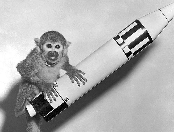 Обезьяна Бейкер (Baker), 28 мая 1959 года запущенная с мыса Канаверал в космос