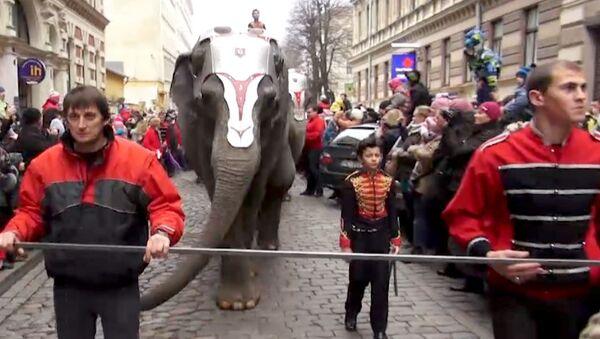 Дрессировщики вывели пятерых слонов на улицы Риги перед многотысячной толпой