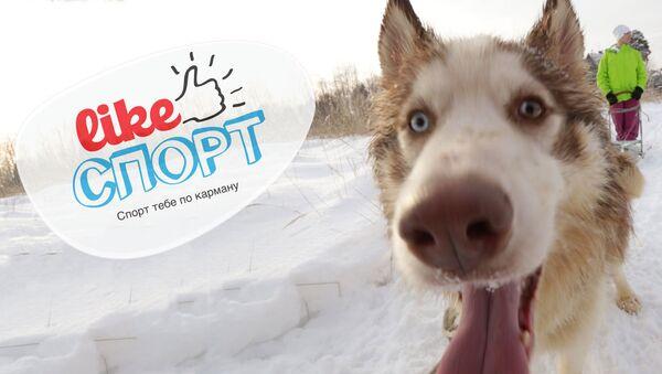 LikeСпорт и сказки про хаски: гонки на собачьих упряжках