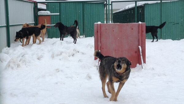 Приют для собак Кожухово. Архивное фото