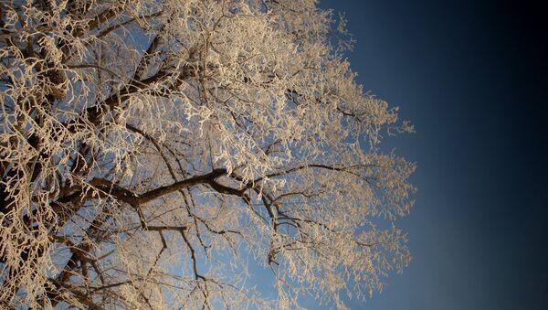 Дерево. Архивное фото