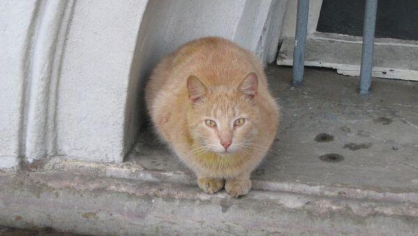 Бездомный кот. Архивное фото