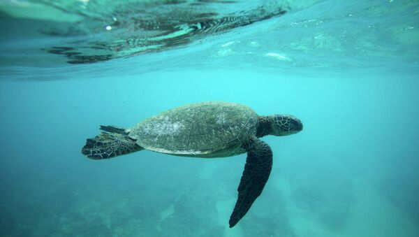 Морская черепаха. Архивное фото