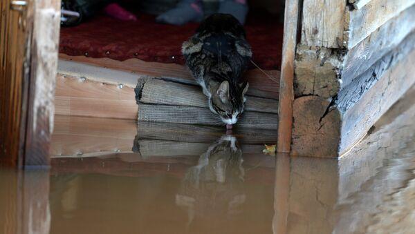 Кошка на крыльце подтопленного дома