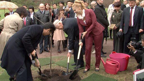 Премьер Японии посадил сакуру и послушал игру на барабанах в саду РАН