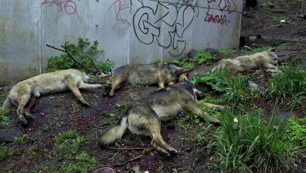 Убитые собаки во Владивостоке