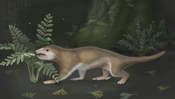 Так предположительно выглядело протомлекопитающее Megaconus