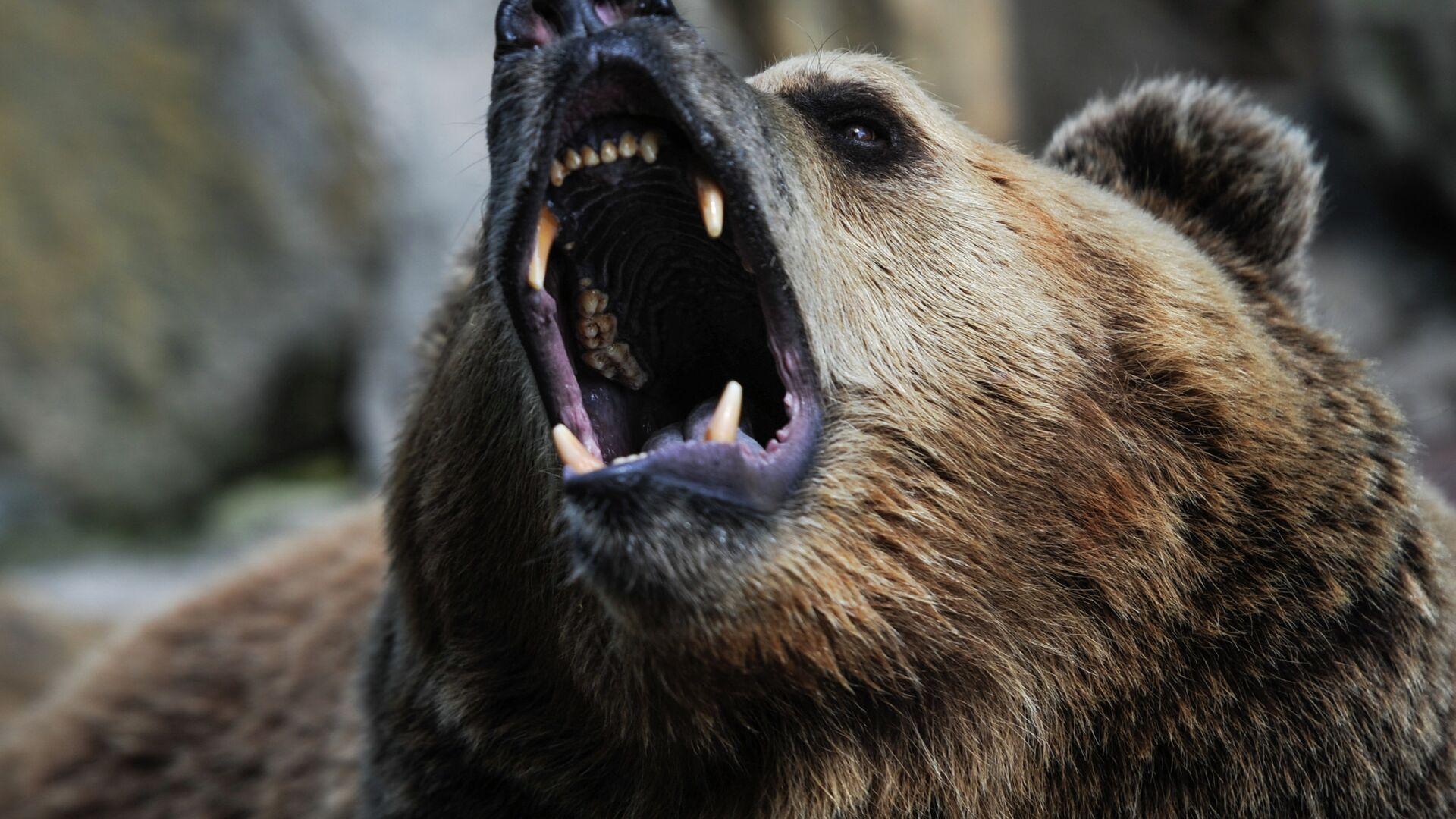 966241962 0:142:2877:1760 1920x0 80 0 0 5bedd9d63f86c8b828ecc299b3caa3fc - В подмосковном цирке медведь напал на дрессировщика и ребенка