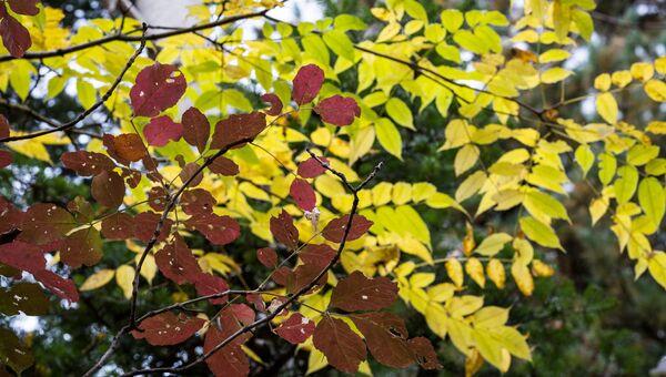 Осень, архивное фото