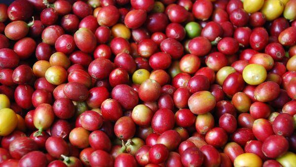 Кофейный урожай