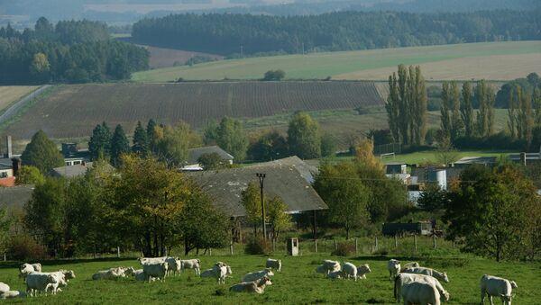 Зарубежные страны: Чехия. Архивное фото