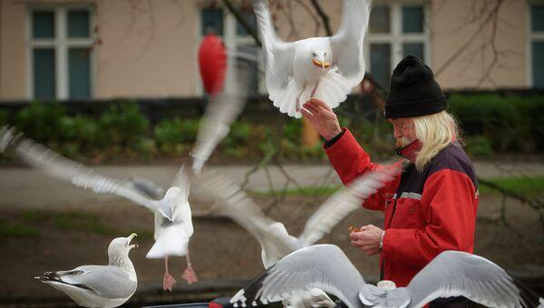 Мужчина кормит чаек на пристани в Ставангере.