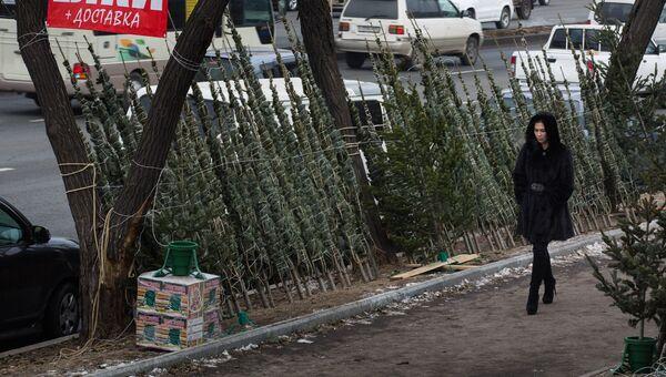 Продажа елок во Владивостоке