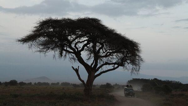 Национальный парк Амбосели, Кения. Архивное фото