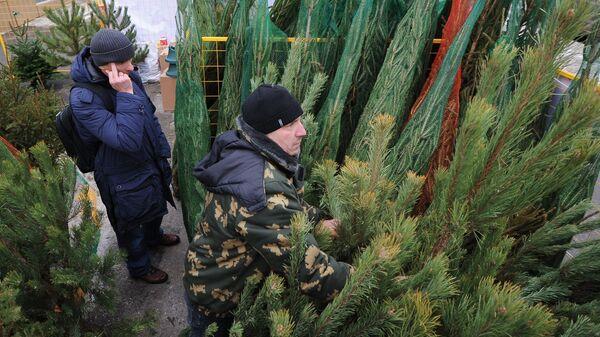 Открытие елочных базаров в Москве