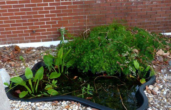 Мокрое дело: 10 полезных правил обустройства водоем на даче