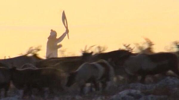Огонь ОИ пронесли по тундре и провезли в оленьей упряжке по Нарьян-Мару