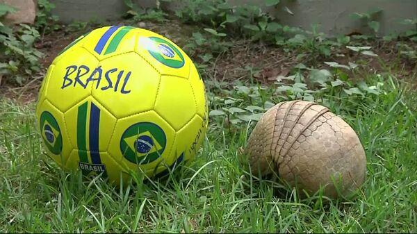 Броненосец Ана показала, почему стала символом ЧМ по футболу в Бразилии