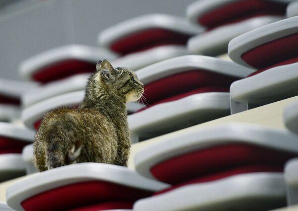 Новый талисман хоккейного клуба Адмирал кошка Матроскина (известная как кот-гурман из аэропорта Владивостока)