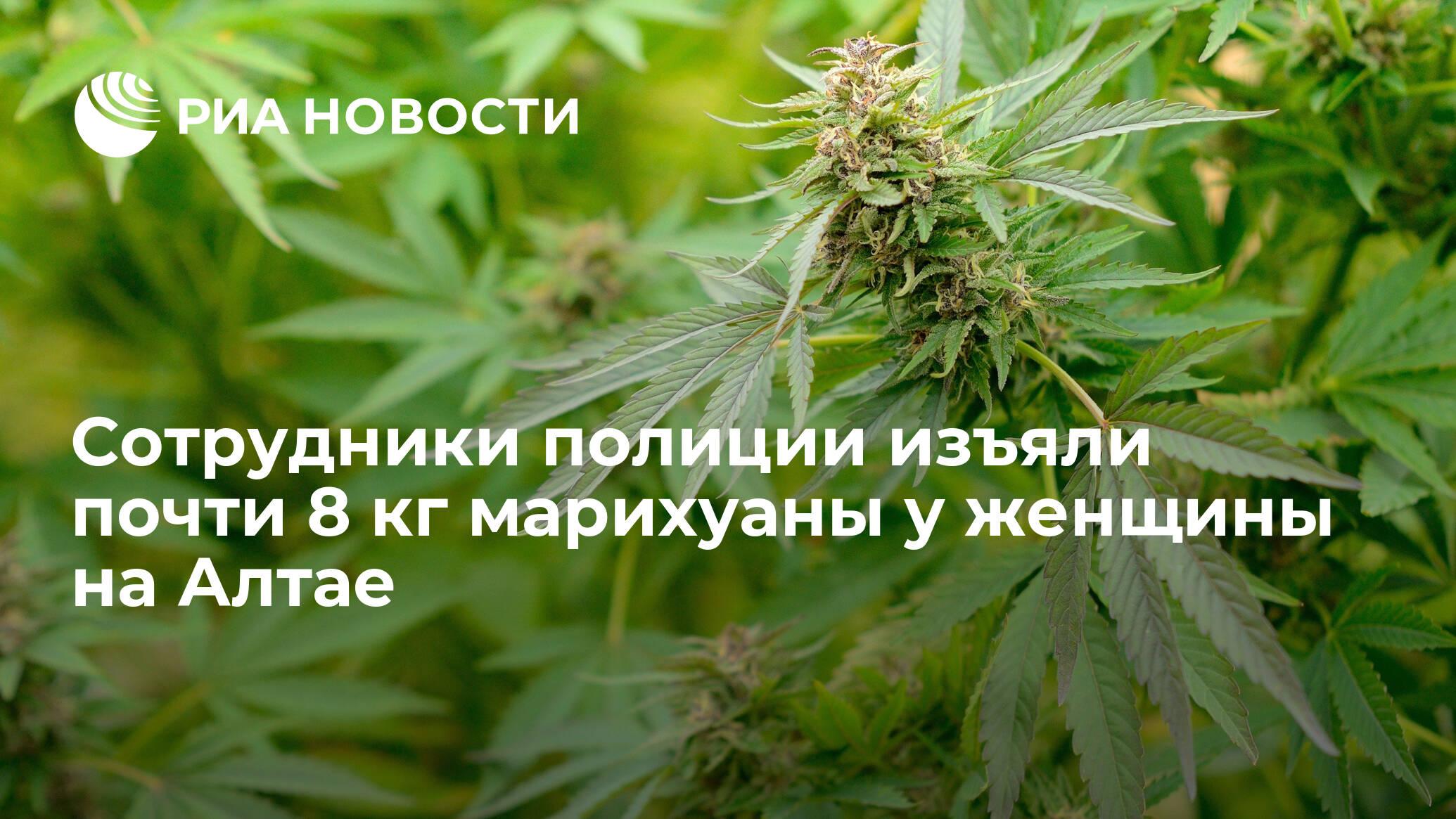 Какая уголовная ответственность за марихуану задержан за выращивание конопли