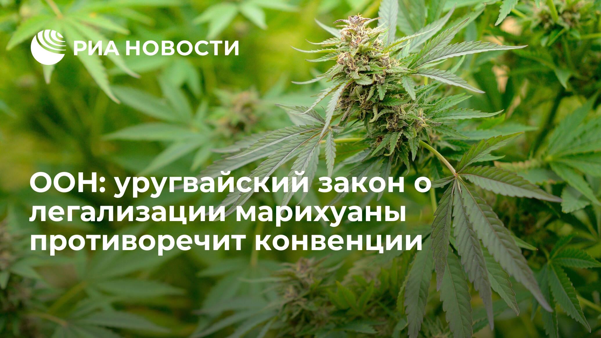 Закон о марихуане в украине 2017 как правильно вырастить марихуану дома